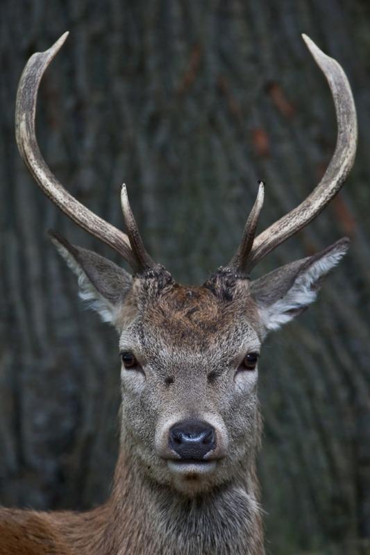 7W8P4766-2 copy - Wildlife