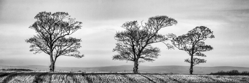 Brandretth Trees - Plants / Flora