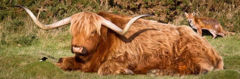 Grandma what big horns youve got-4998 - Wildlife