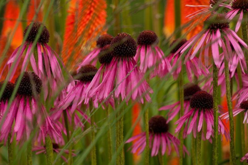 - Garden & Flower Portraits