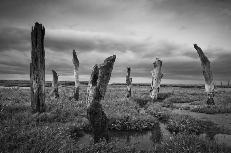Thornham Stumps. - Monochrome