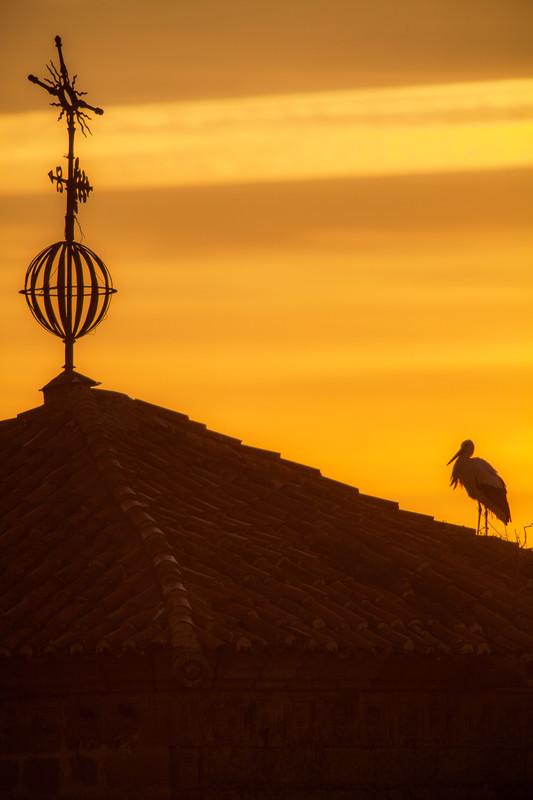 A white stork in trujjilo spain