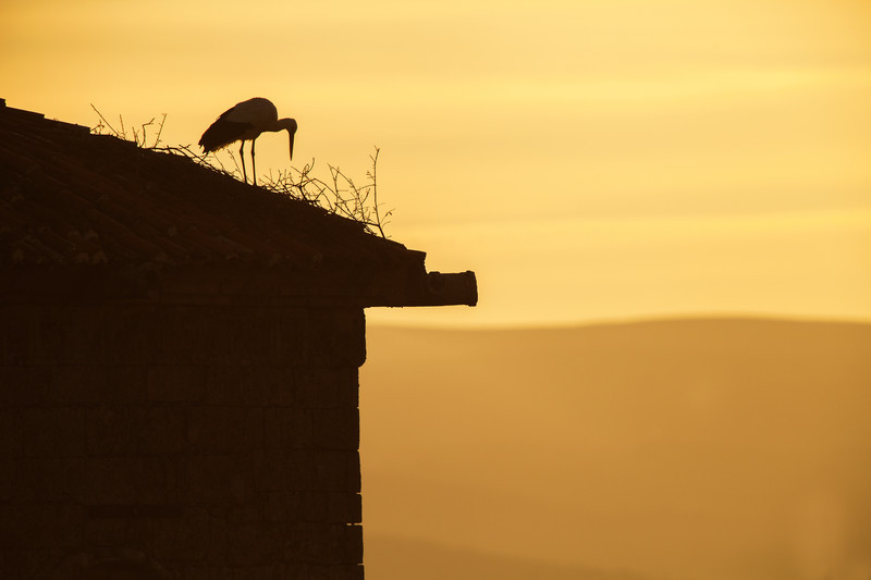 white stork, extremadura, spain