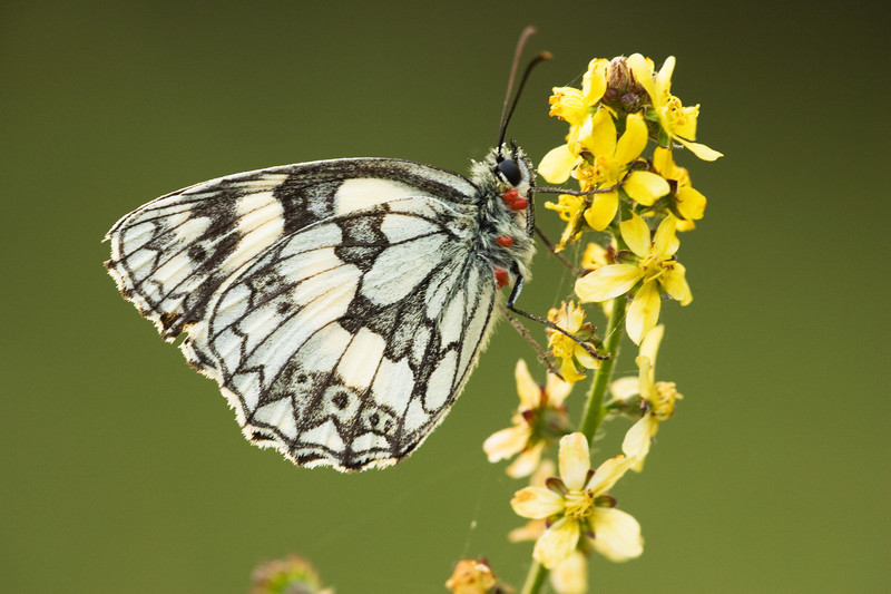 marble white, kent, macro photography