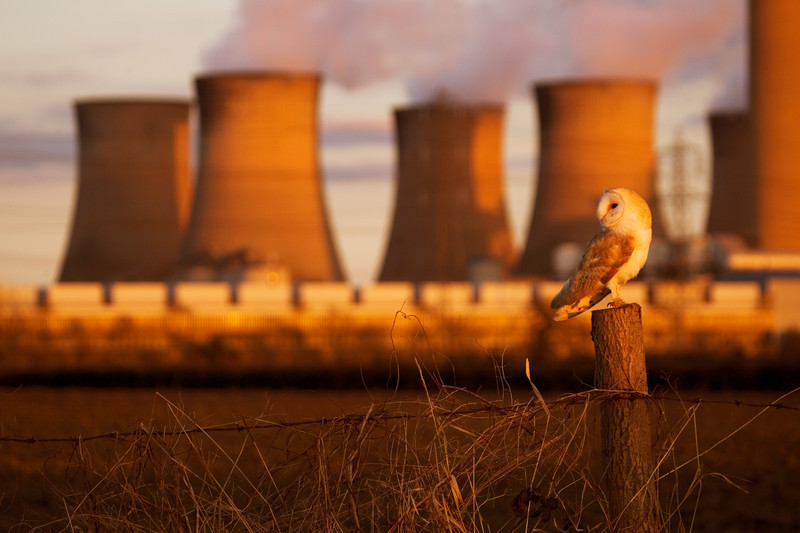 a barn owl next to a power station, Nottinghamshire.