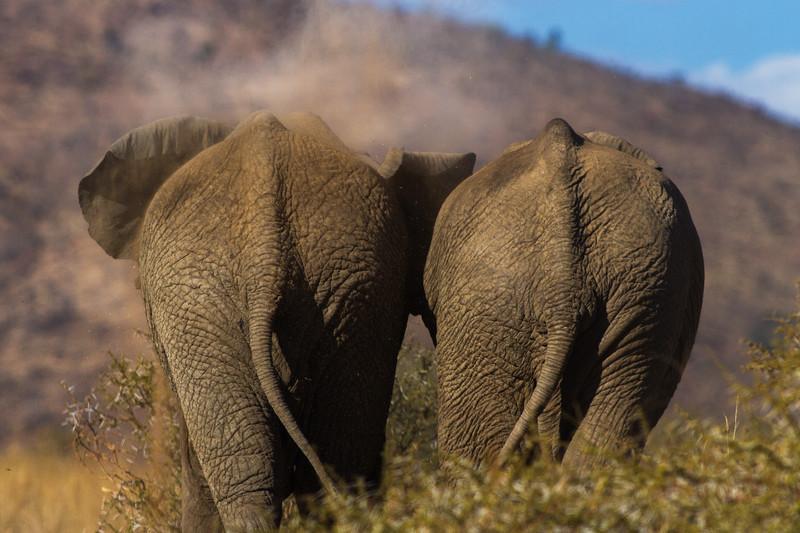 Dust Bath, Africa - Wildlife Photography.