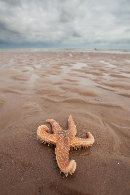 starfish on a rural Lincolnshire beach