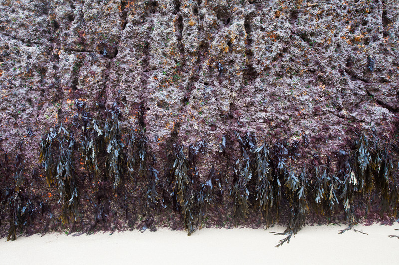 Hanging Seaweed - Contemporary Photography.