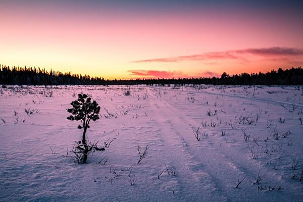 Arctic Landscape - Landscapes