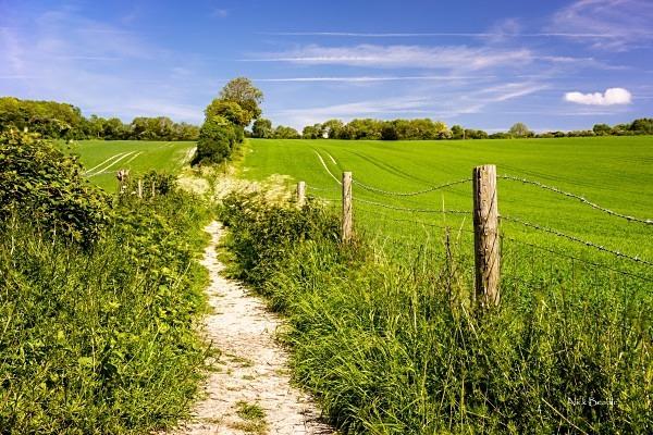 Surrey Hills Pathway - Landscapes