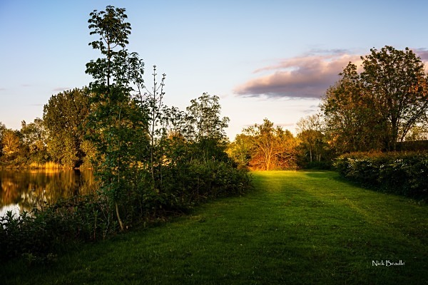 Sunlit Tree - Landscapes