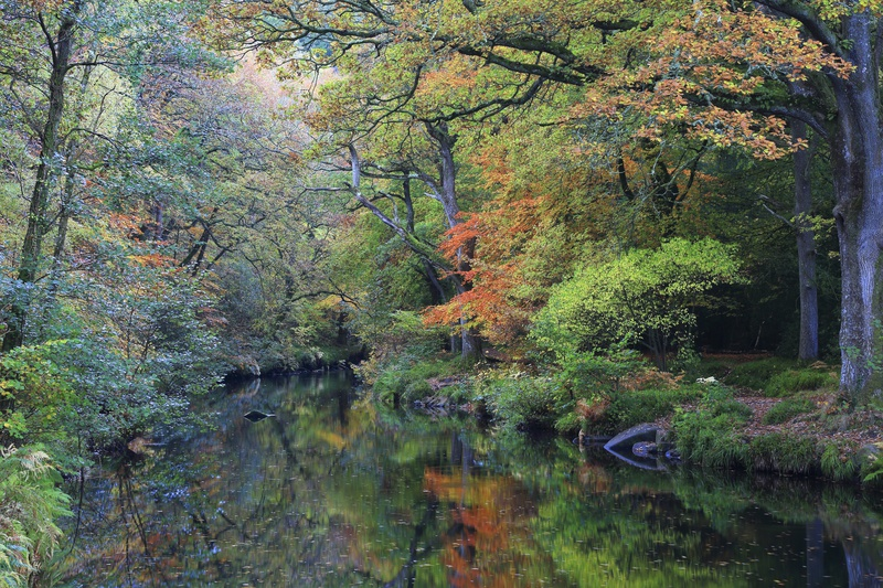 Fingle in the Fall - Dartmoor Landscapes Prints