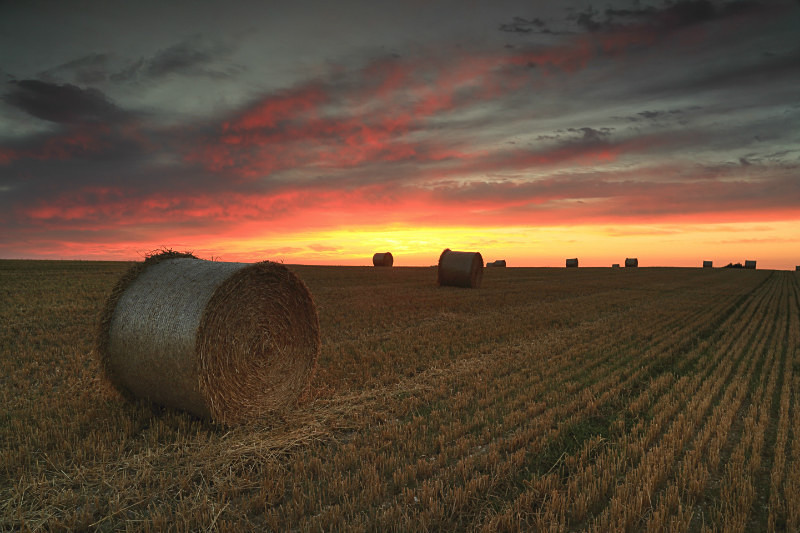 Hay Bales at Dawn - UK Landscape Prints