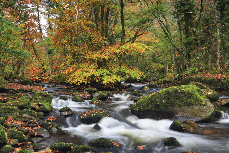 River Teign Rush - Dartmoor Landscapes Prints