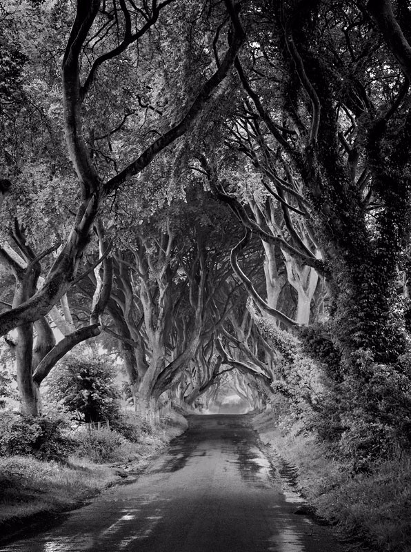 The Dark Hedges - Black & White