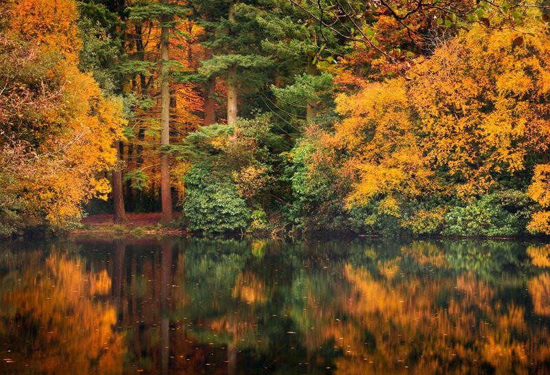 Autumn Reflection - Co Down