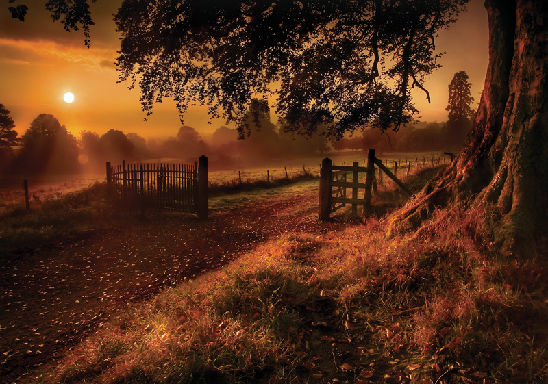 Autumn Sunrise in Derrymore Woods in Bessbrook, Co Armagh in Northern Ireland