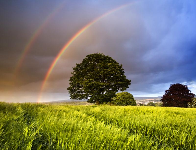 Tree & Rainbows - Co Armagh
