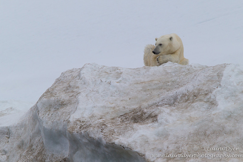 Looking out - Svalbard