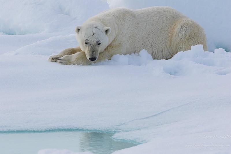 - Svalbard