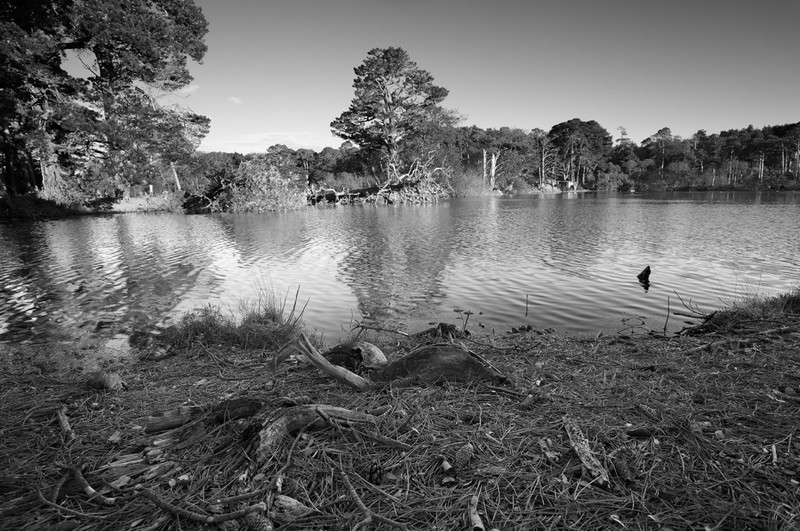 Brownsea Island - West Lake - Black & White Scenic