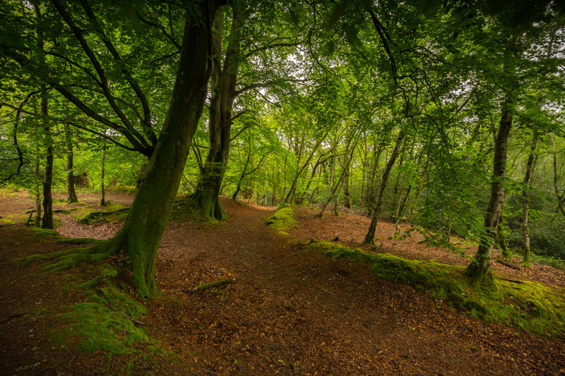 Thorncombe Woods in Spring, Dorset - Dorset Landscapes