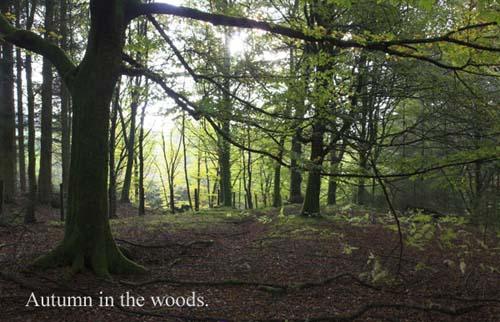 IMG_3910-01 - trees