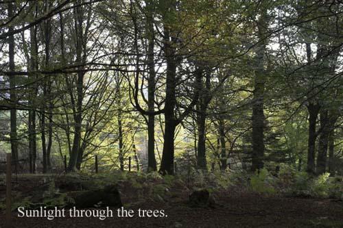 IMG_3900-01 - trees