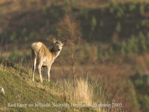 IMG_5225-01 - Animals: Wild