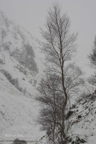 CRW_1830-01 - Scotland