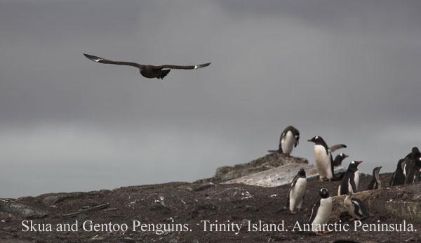 ant000455 - Antarctica 4