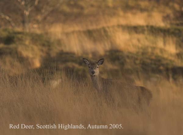 IMG_5232-02 - Animals: Wild