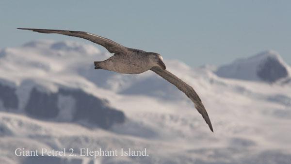 ant000341 - Antarctica 3
