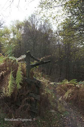 IMG_3992-01 - trees