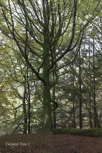 IMG_3907-01 - trees