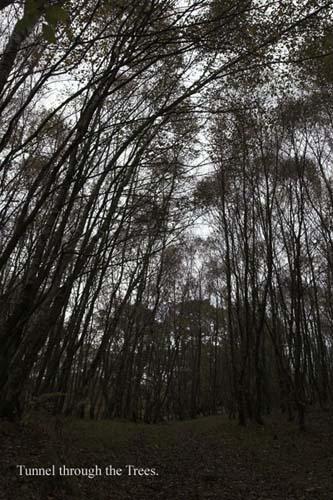 IMG_3951-01 - trees