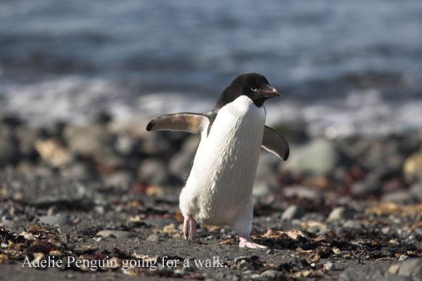 ant000379 - Antarctica 3