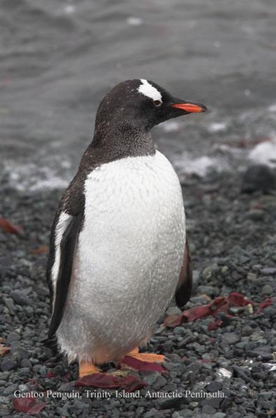 ant000448 - Antarctica 4