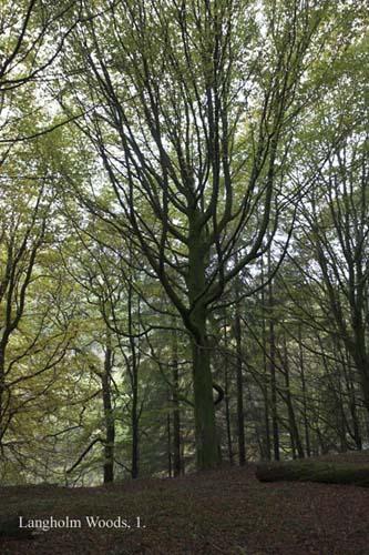 IMG_3892-02 - trees