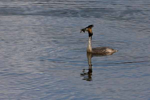 IMG_5383 - Others