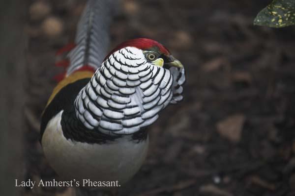 IMG_7924-01 - Birds: Captive