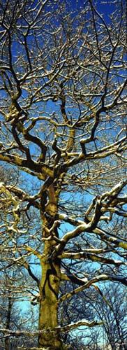 hebden tree - trees