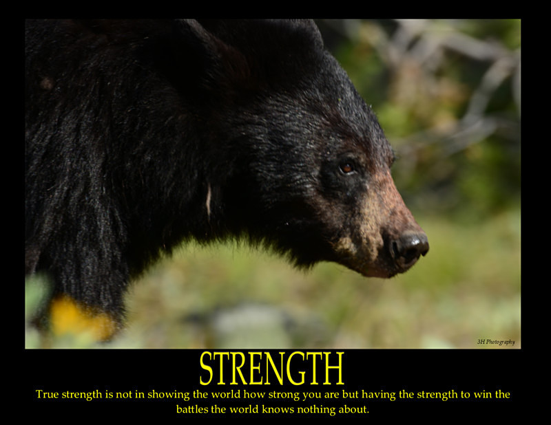 Strength Poster with Border JULY 2016 - Inspirational Office & Classroom Art