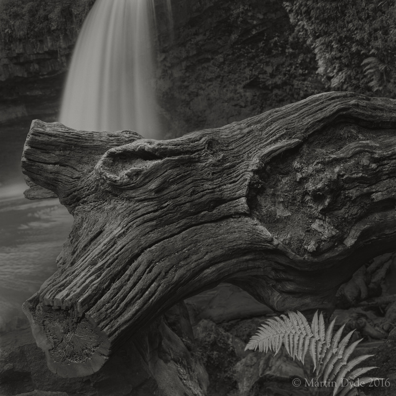 Waterfall, log and fern, Sgwd Gwladus, Brecon Beacons, Wales | The Silver Monochrome: black-and-white film photography by Martin Dyde