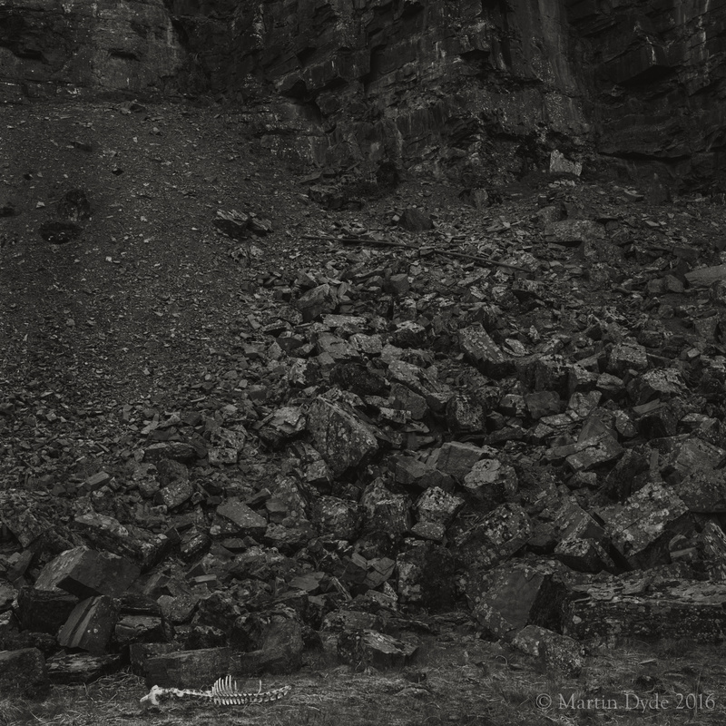 Remains of fallen sheep in disused quarry 1, Fan Bwlch Chwyth, Brecon Beacons | The Silver Monochrome: black-and-white film photography by Martin Dyde