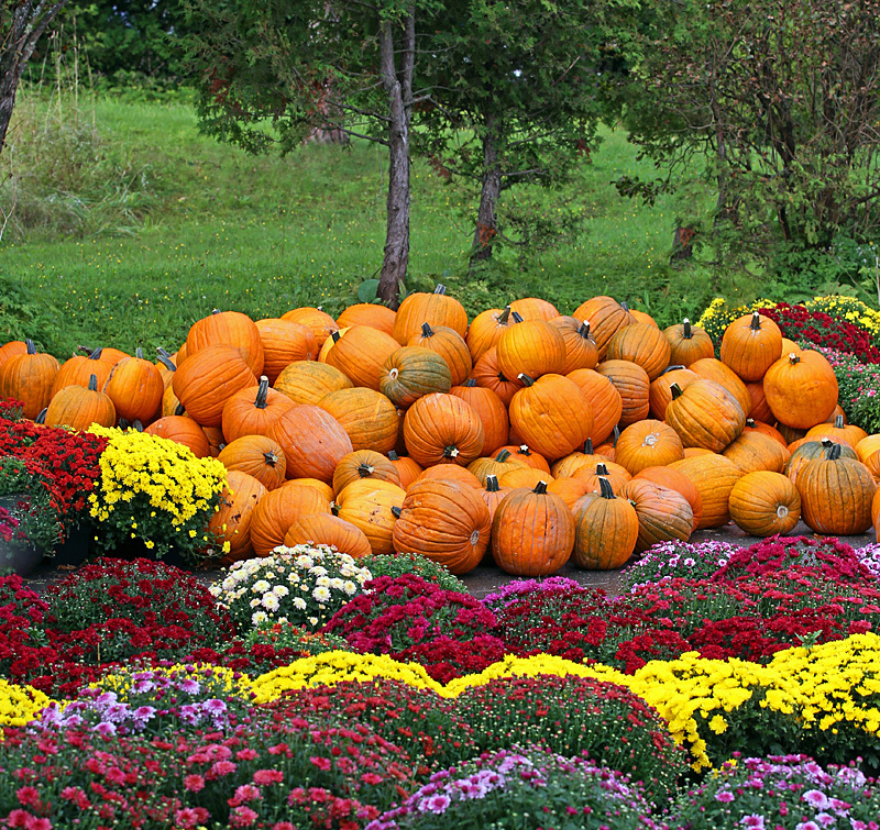 Mums & Gourds - Autumn Festival