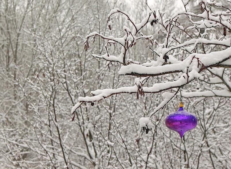 The Color Purple - Winterscape