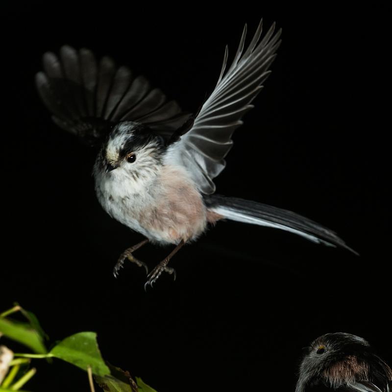 - Garden Birds