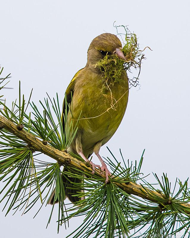 garden birds-4 - Garden Birds