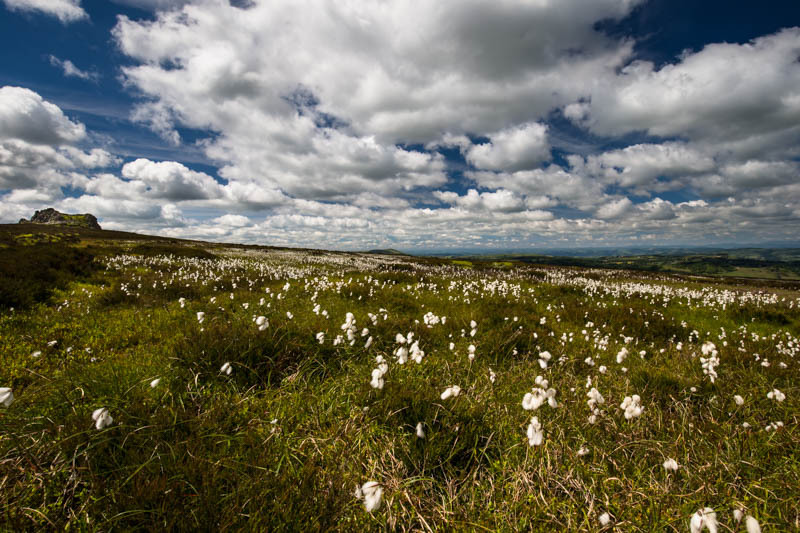stiperstones devil's Chair and cotton grass - Wilderland, Wildlife & Wonder from the Shropshire Borders